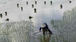 История о биооружии США на Окинаве — начало войны компроматов